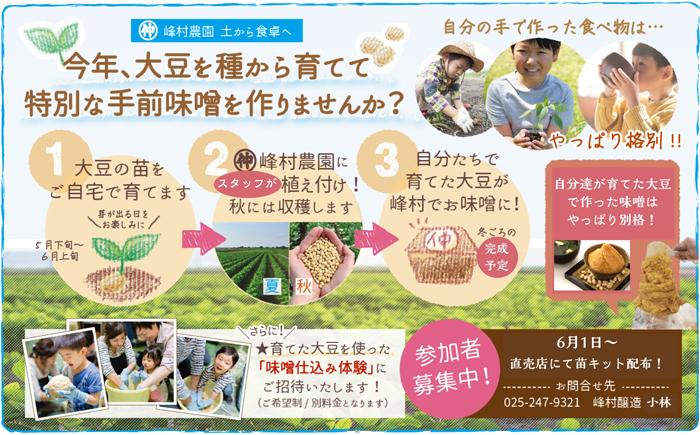 今年、大豆を種から育てて特別な手前味噌を作りませんか?